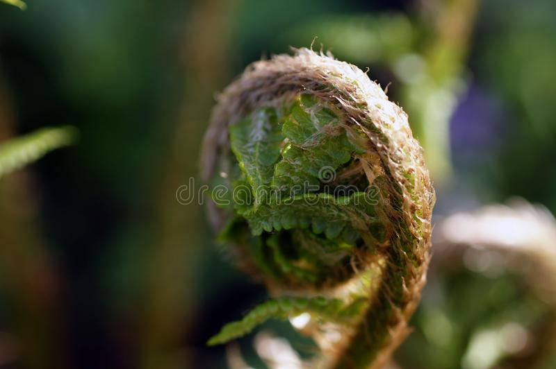 Makro von grünen Farnblättern in einem botanischen Garten stockfoto