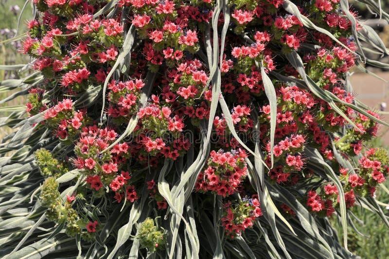 Makro- wierza klejnotu kwiat obraz stock