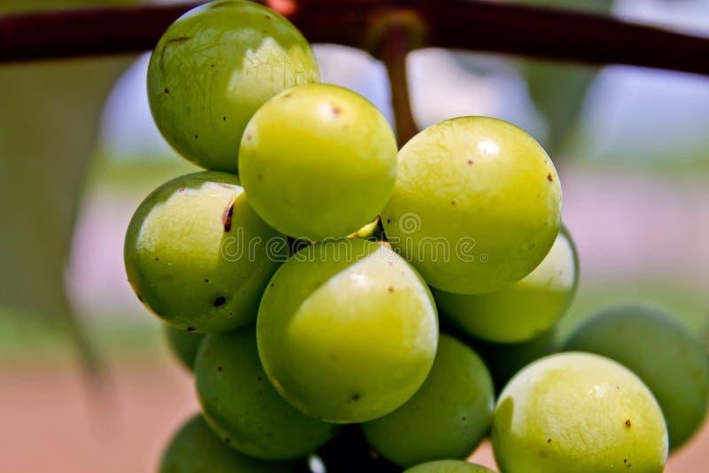 Makro- winogrona zdjęcie stock
