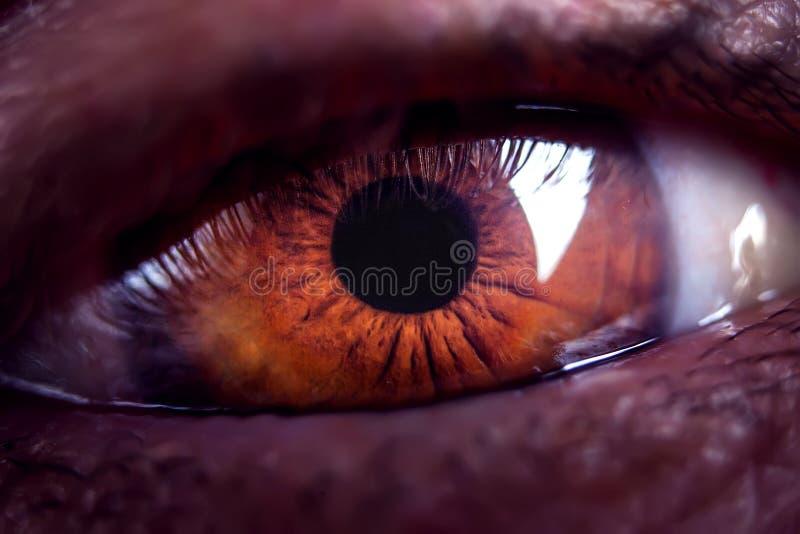 Makro- wizerunek ludzki brązu oko w górę szczegółów, zdjęcia royalty free