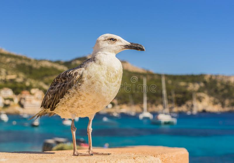 Makro- wizerunek seagull obrazy stock