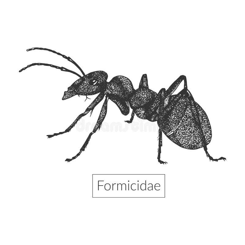 Makro- wizerunek szczegółowa ręka rysująca mrówka ilustracja wektor
