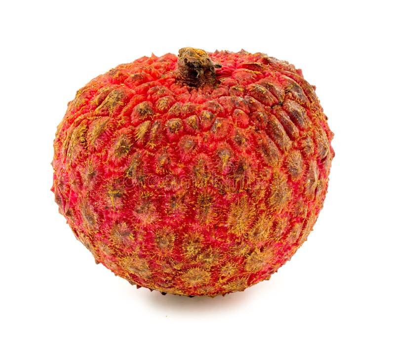Makro- zbliżenie odizolowywający na białym tle lychee owoc fotografia royalty free