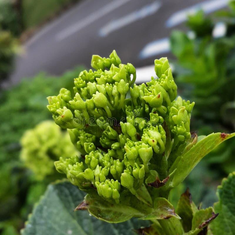 Makro- zielony kwiat fotografia royalty free