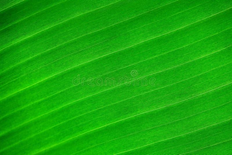 Bakgrund av den gröna leafen royaltyfri bild