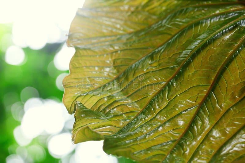 Bakgrund av den gröna leafen royaltyfri fotografi