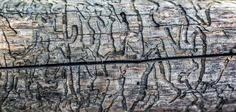 Makrobakgrundstextur av wood skadat vid termit Spår av termit på gammalt trä royaltyfria foton