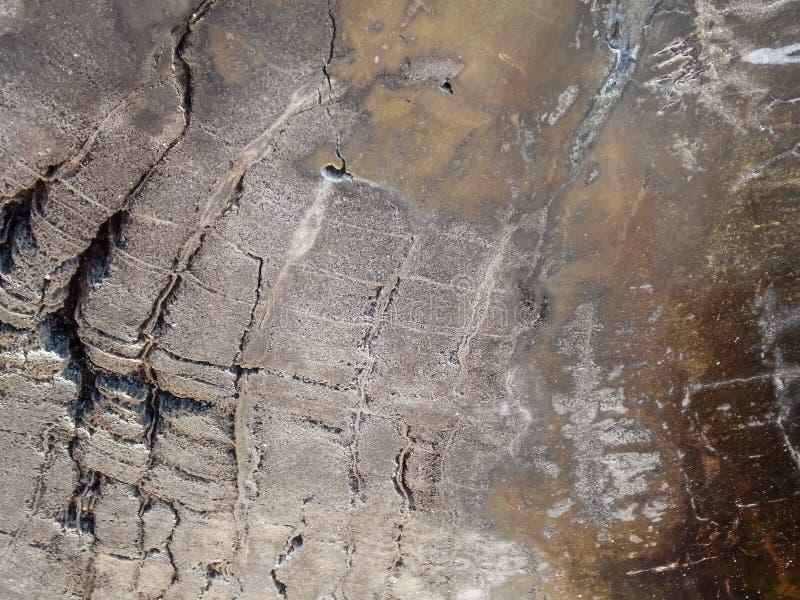 Makrobeschaffenheit des Bronzeversteinerten Holzes stockbild