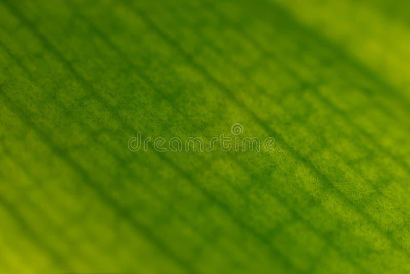 Makrobeschaffenheit des Orchideenblattes Nat?rlicher Hintergrund Makroansicht der abstrakten Naturbeschaffenheit und des organisc lizenzfreie stockbilder