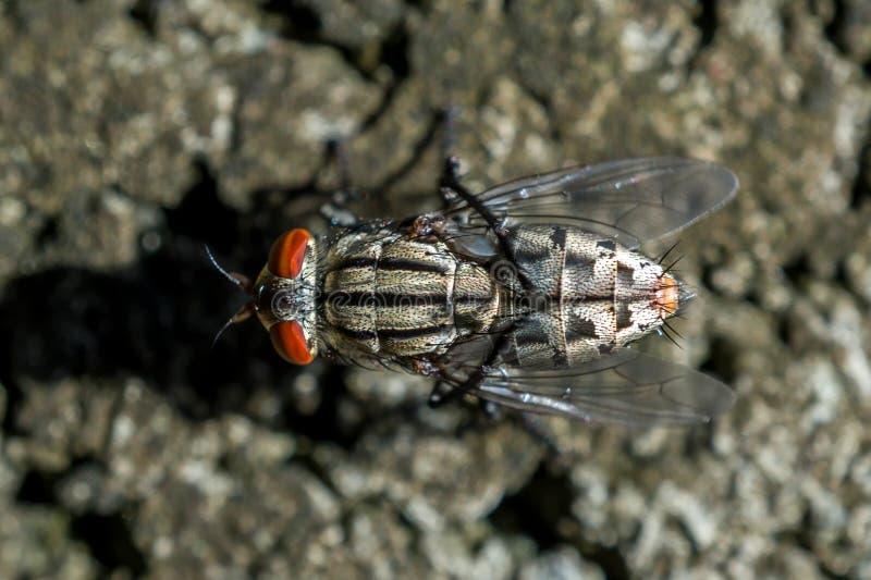 Makrobild av den bästa sikten för klungafluga royaltyfri foto