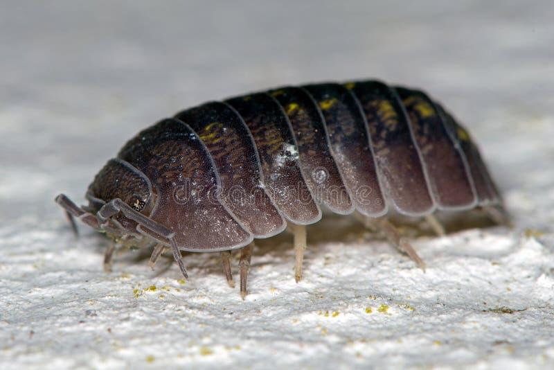 Makrobild av små skaldjur på väggen royaltyfri foto