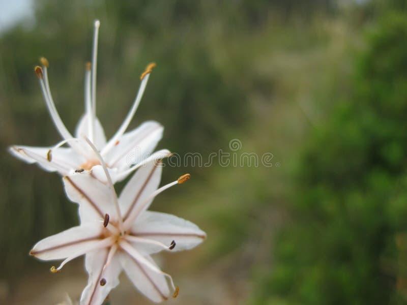 Makrobild einer weißen Blume stockbilder