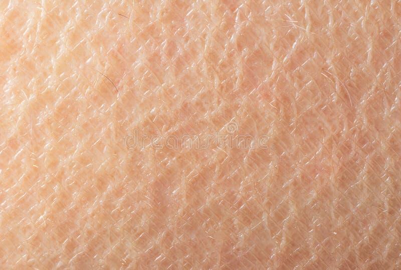 Makrobilden av ytbehandlar mänskligt hudhår mindre arkivfoto