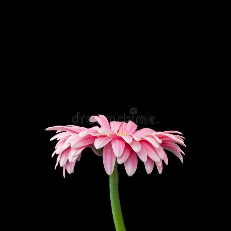 Makroblumen-Hintergrund lizenzfreies stockbild