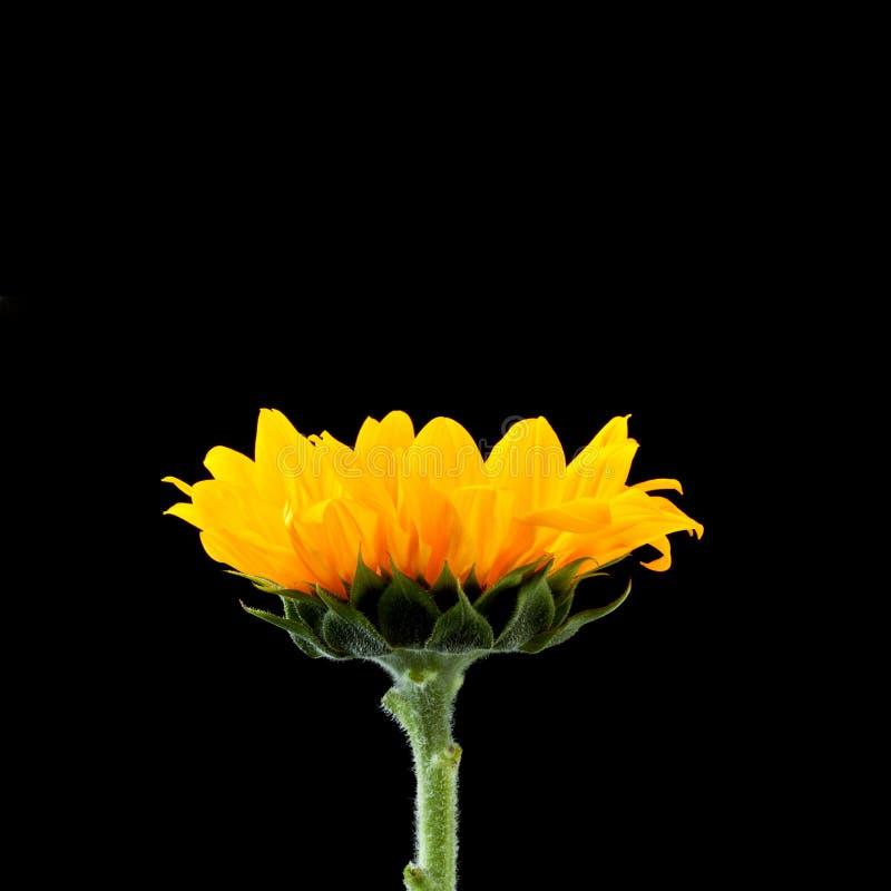 Makroblumen-Hintergrund stockfotos