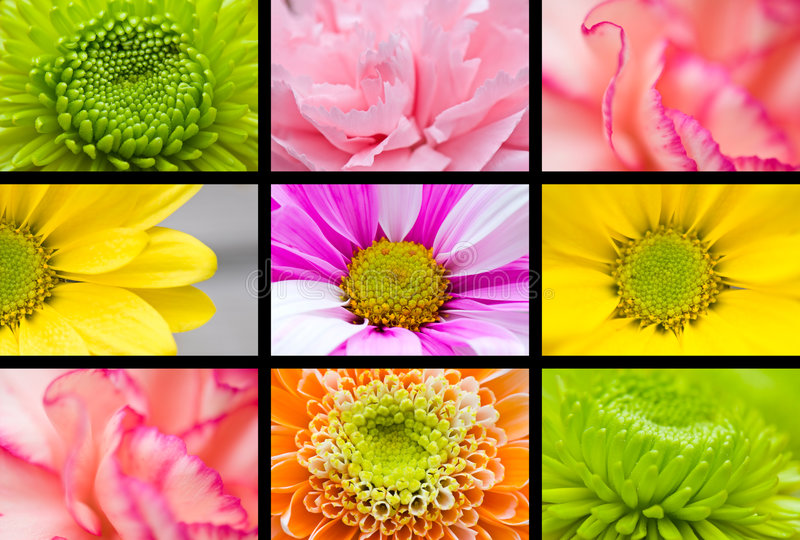 Makroblumencollage lizenzfreie stockfotografie