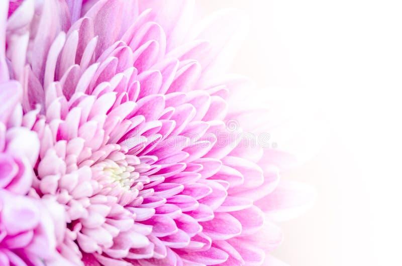 Makrodetail der bunten blühenden Blume mit weißem Hintergrund stockfotos