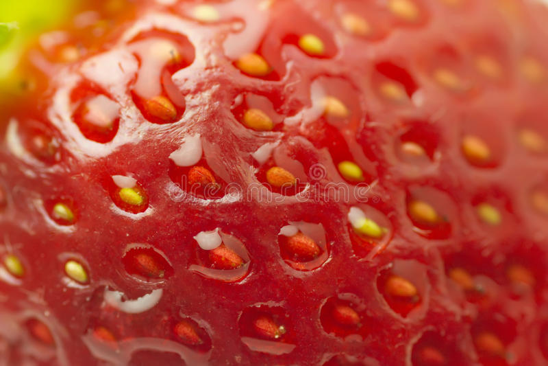 Organisk jordgubbe för makro royaltyfria foton