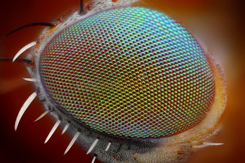 Makroflugan synar   arkivbilder