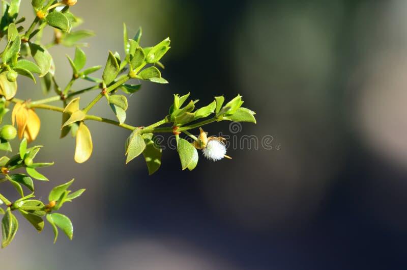 Makrofoto av den vita blomman royaltyfria foton