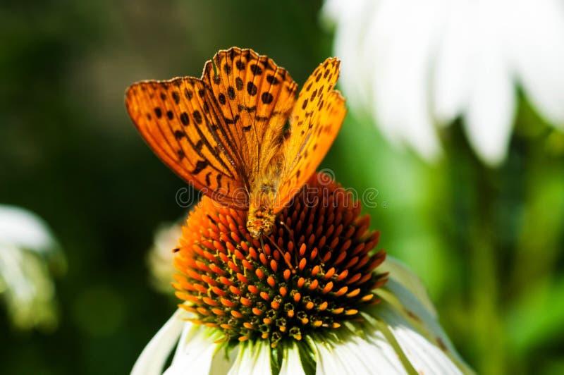 Makrofoto av en härlig fjäril fotografering för bildbyråer