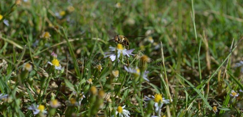 Makrofoto av ett bi som får klart att ta till flyget arkivfoton