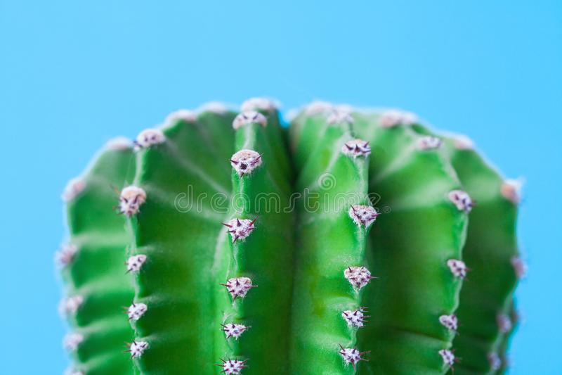 Makrofoto av kaktuns och ryggar på blå bakgrund close upp arkivfoto