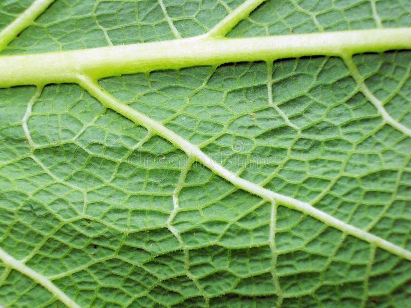 Makrofoto av leafen fotografering för bildbyråer