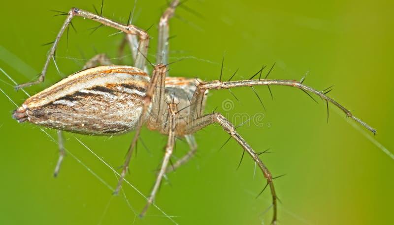 Makrofoto av spindeln på rengöringsduk på naturbakgrund, selektiv fokus fotografering för bildbyråer