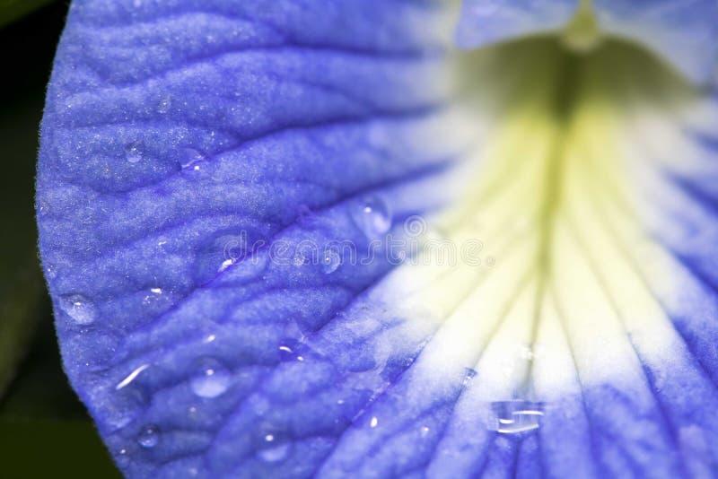 Makrofoto des Taus auf blauer Blume lizenzfreie stockbilder