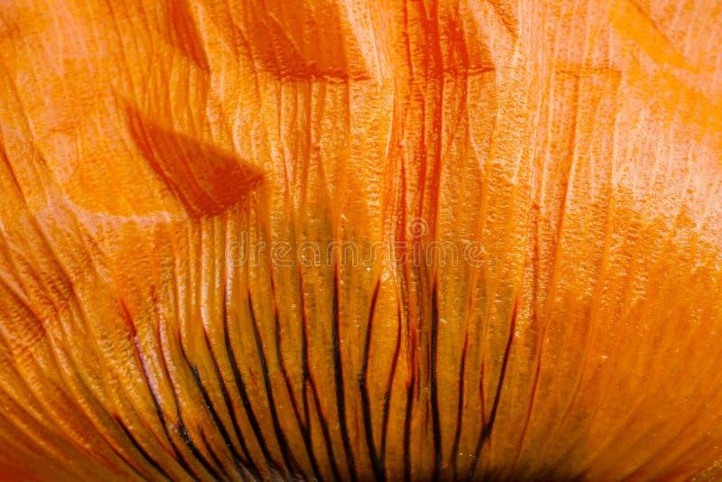 Makrofoto einer Leuchtorange Poppy Leaf lizenzfreie stockbilder