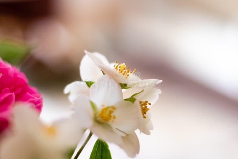Makrofoto einiger weißer Blumen lizenzfreies stockbild