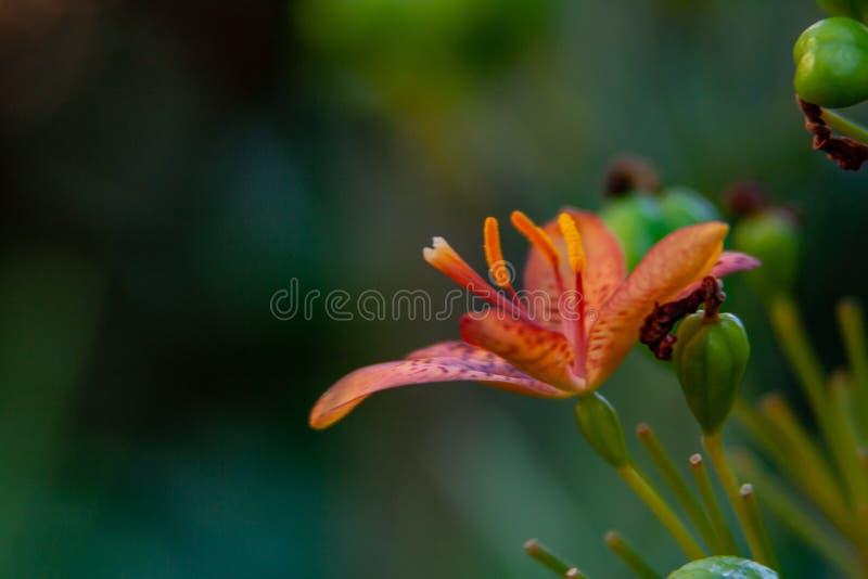 Makrofoto från en exotisk orange blom royaltyfri bild