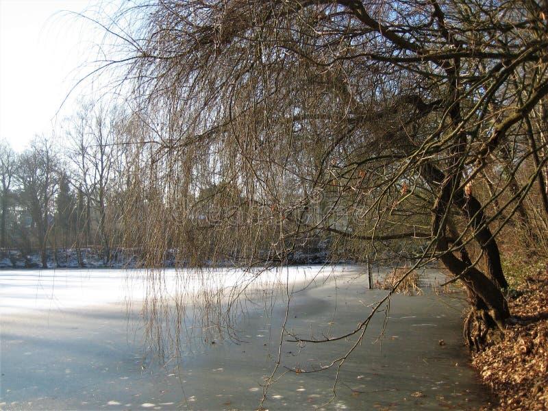 Makrofoto mit dekorativem Hintergrund der Winterlandschaft in der europäischen Stadt von Berlin im Parkbereich stockbilder
