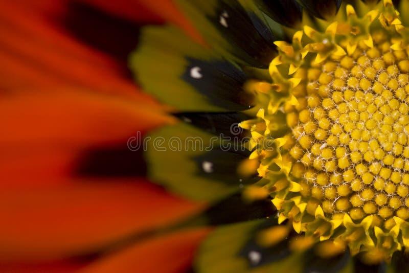 Makrofoto von der roten und gelben Blume lizenzfreies stockbild