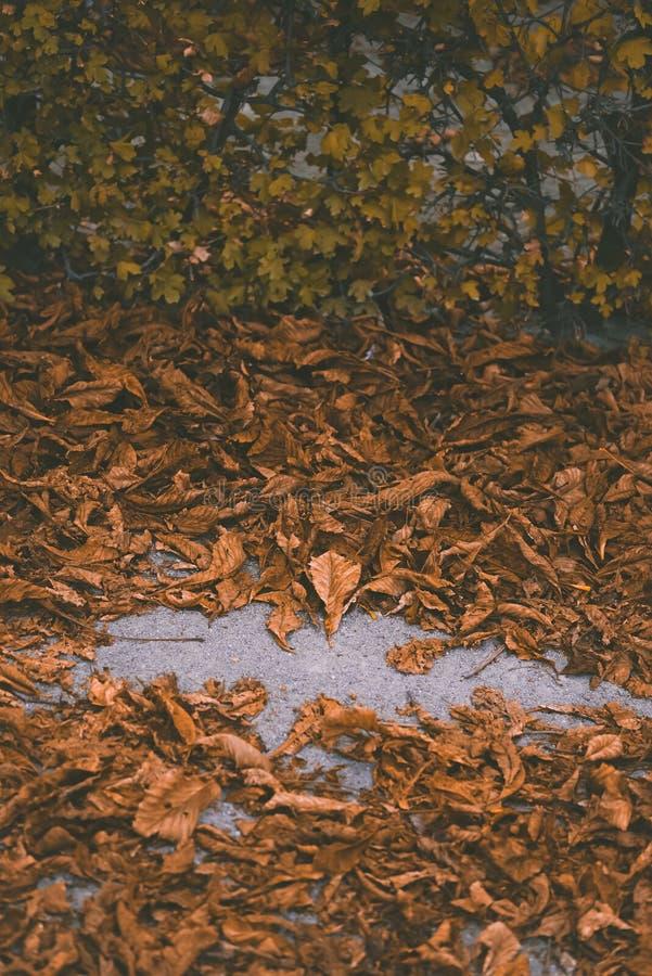 Makrofoto von Herbstgelbblättern von sonnigem stockbild