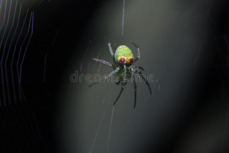Makrofotografi av ensamt rov-, en härlig och färgrik grön gul rosa spindel på verklig rengöringsduk och en mörk bakgrund av natur royaltyfri bild