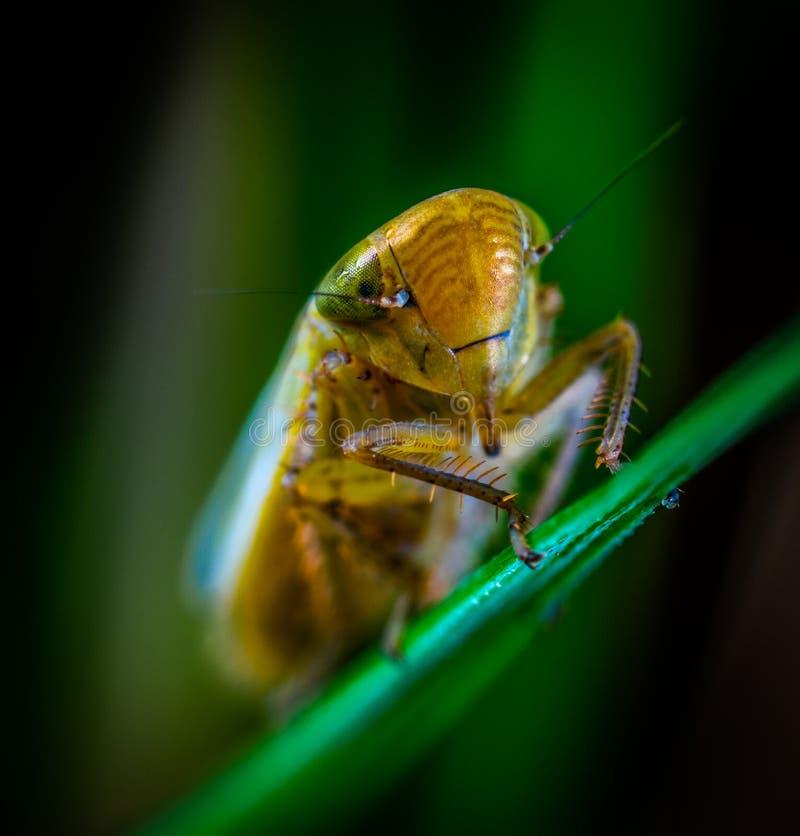 Makrofotografie des braunen Insekts lizenzfreies stockfoto
