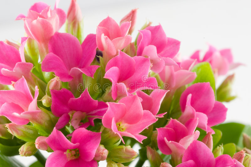 Makrofrühlingsblumen. lizenzfreie stockfotos