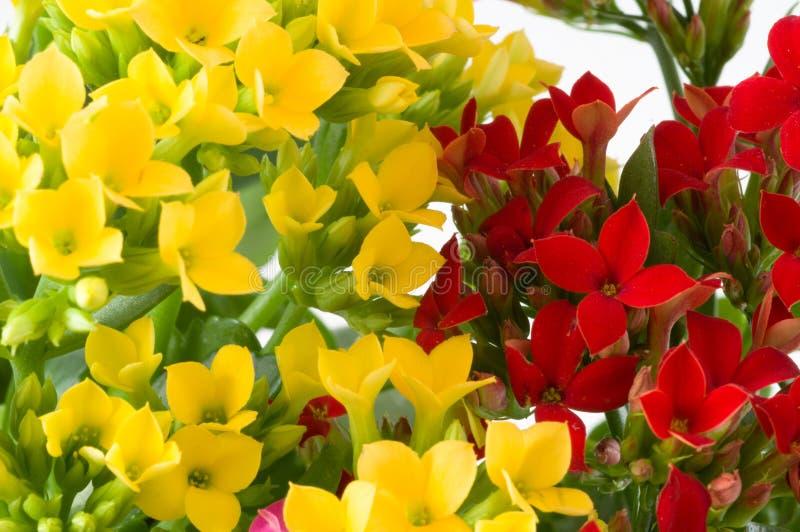 Makrofrühlingsblumen. stockfoto