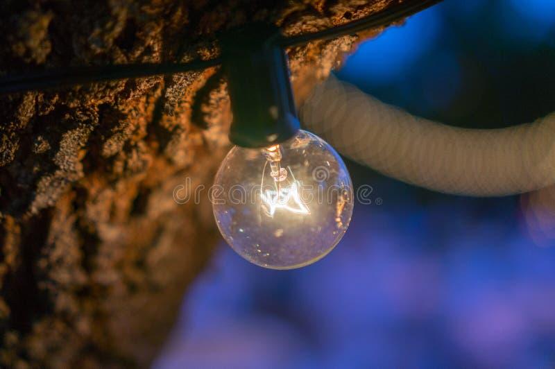 MakroJordklot-stil Lightbulb royaltyfri fotografi