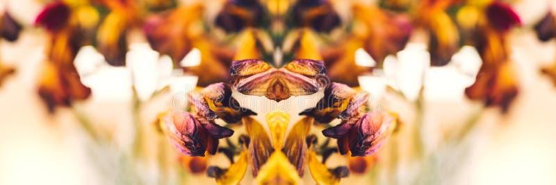 Makronärbildfotografiet av en freesia torkade den döda freesiablomman fotografering för bildbyråer