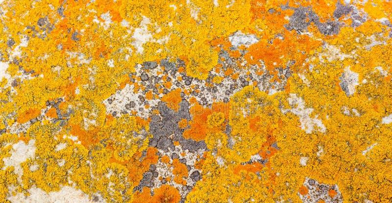 Makronahaufnahmebeschaffenheit der gelben und orange Flechte lizenzfreie stockfotos