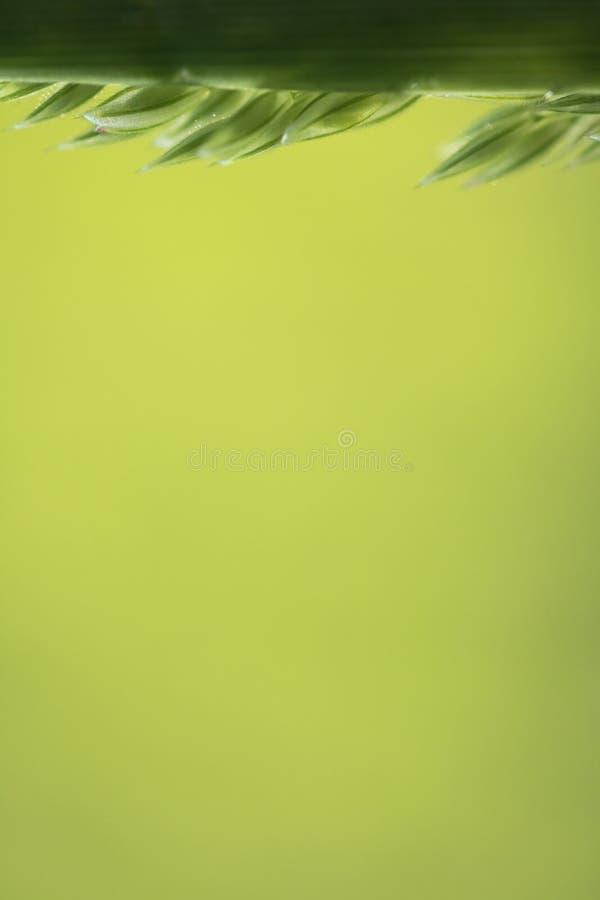 Makronatur - som är nära upp av att rensa örtgräs i suddig bakgrund fotografering för bildbyråer