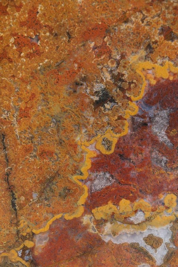Makrophotographie des vertikalen, südwestlichen Jaspisses lizenzfreies stockfoto