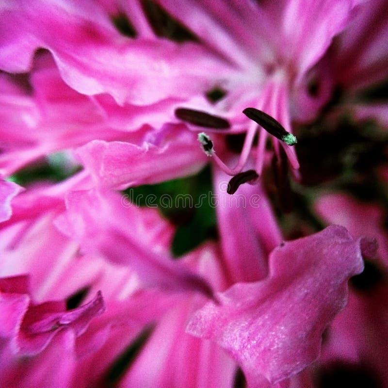 Makrophotographie von Natur ` s Blumen stockfotografie