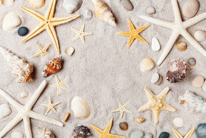 Makrorahmen von den Starfish und Muschel auf Draufsicht des sandigen Strandes lizenzfreie stockfotografie