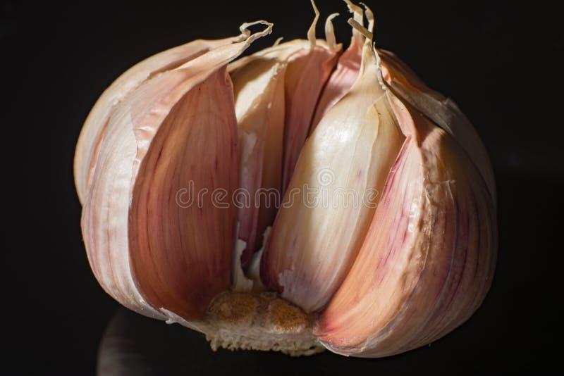 Makrosammlung, französischer rosa Knoblauchknolleabschluß oben lizenzfreies stockbild