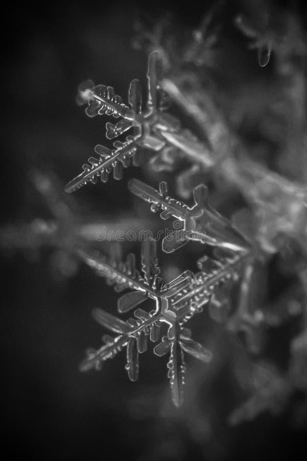 Makroschneeflocke Schwarzweiss-2 stockfotos