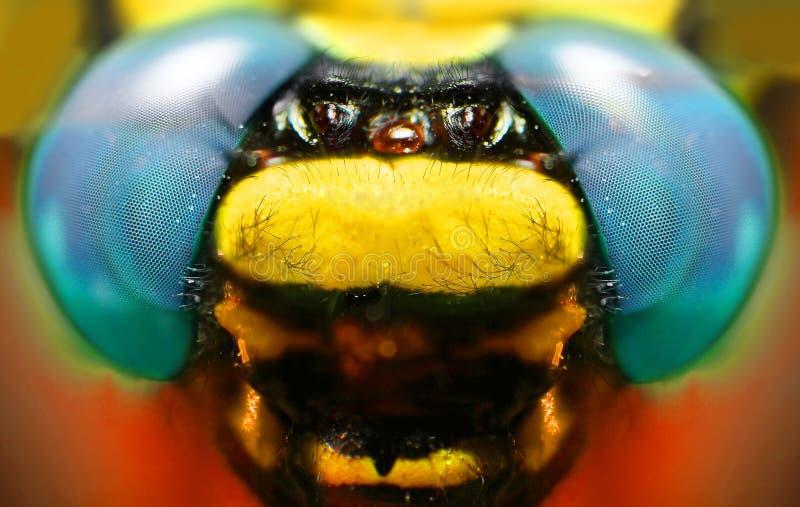 Makroschuß: Fragment des Kopfes einer Libelle lizenzfreies stockbild